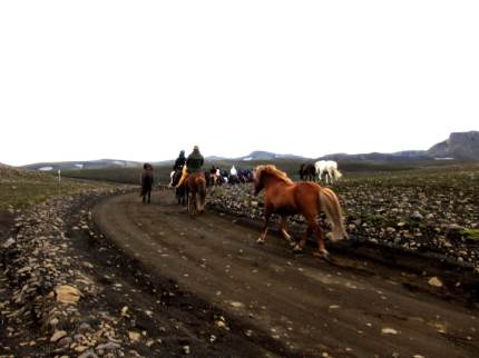 Islandshästar på grusväg. Islands inland i närheten av Landmannalaugar