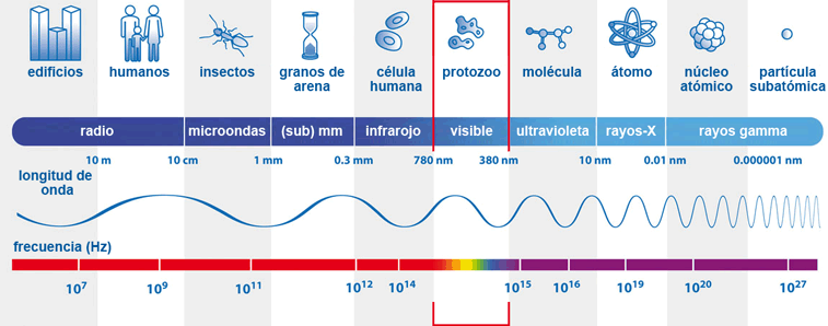 Espectro de longitud de onda