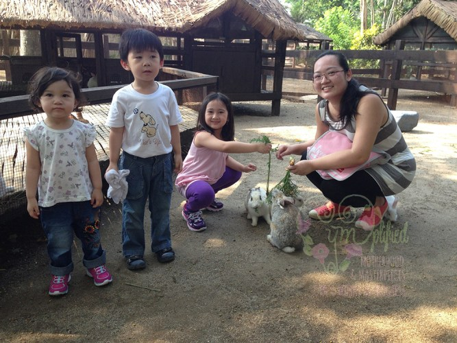 feeding bunnies at fun farm
