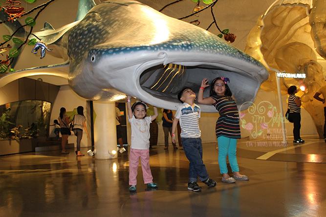 mind museum whaleshark