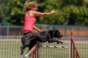 Lisa and Gina the black Labrador Retriever running agility