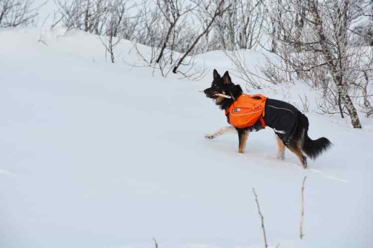 sac à dos chien randonnée