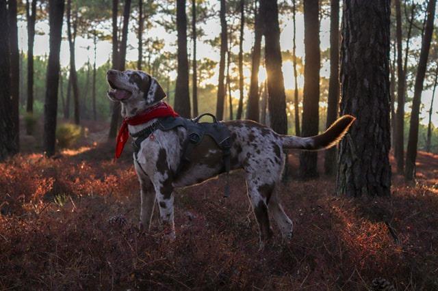 sac de bat chien randonnée