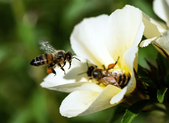 A bee hovering over a flower