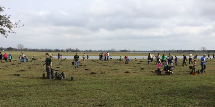 Scouts from multiple scouting organizations plant trees during the 2017 Arbor Day tree planting event at George Bush Park. (Cypress News Review photo by Creighton Holub)
