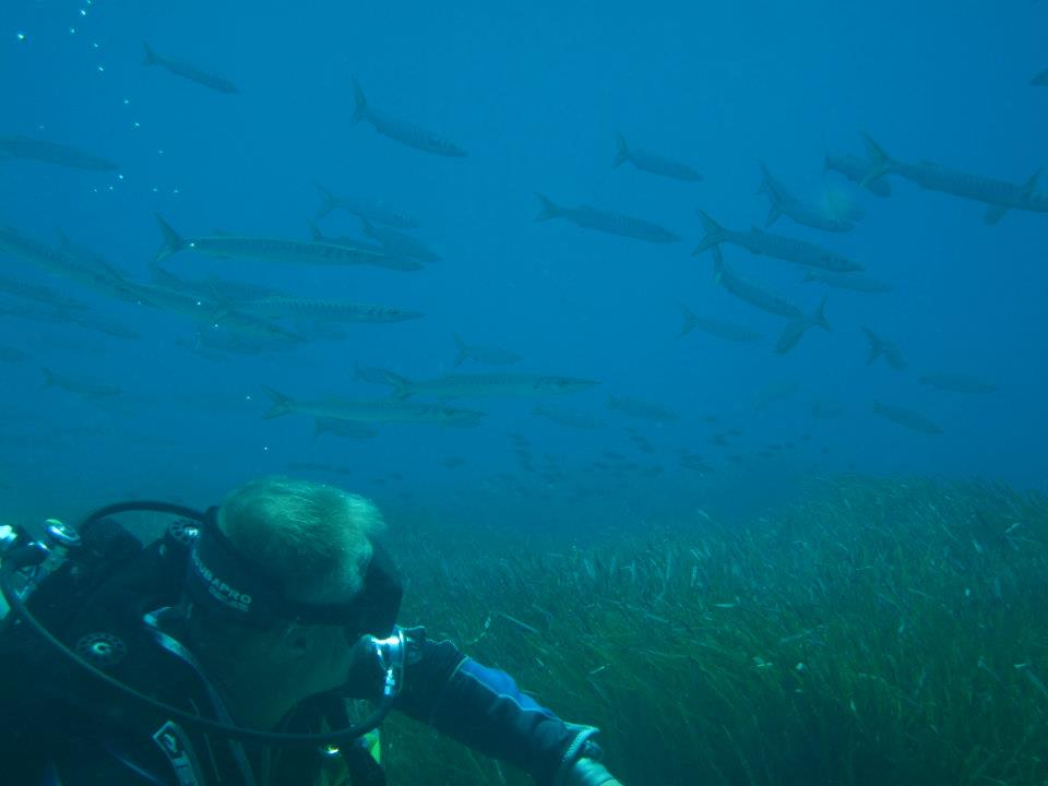 diving with large shoal of barracuda at latchi