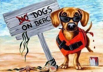 Καθορισμός Παραλιών για λούσιμο σκύλων