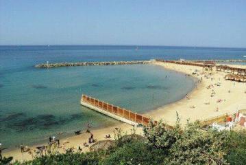 Αυξάνονται οι φωνές για δημιουργία παραλιών για σκύλους στην Κύπρο
