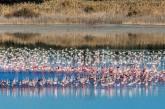 Διαδρομή Πτηνοπαρατήρησης Λάρνακα