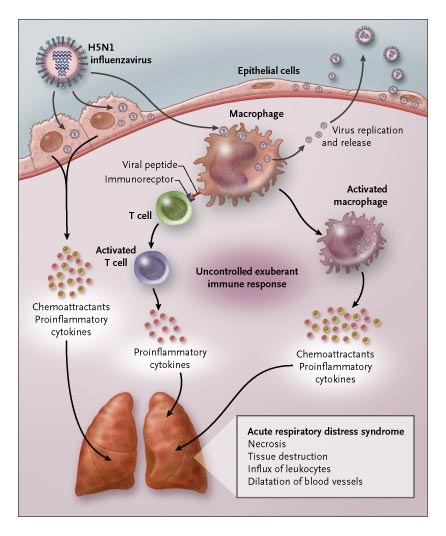 triggering a cytokine storm