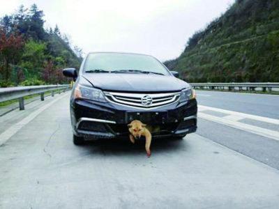 悲しげに便器から見上げる子犬が……中国の「抜け出せなくなった」犬猫たちの画像2