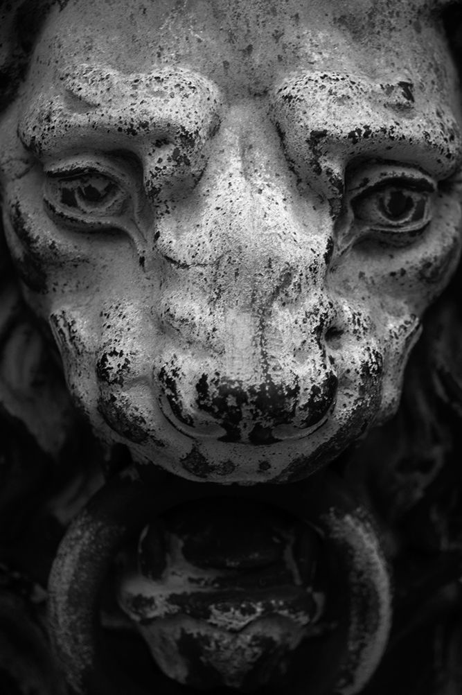 Black and white photograph of a tarnished iron lion's head on an ornate gate.