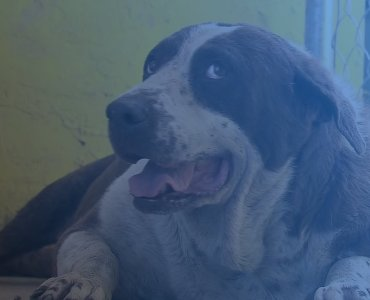 200 dogs and 50 cats died in hurrican dorian bahamas shelter dapulse news