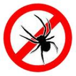 spinnenbestijding