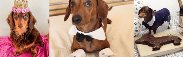 Two Doxies Got Married and Here's What Happened