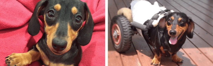 Hot Dog of the Month: Ollie and Tink