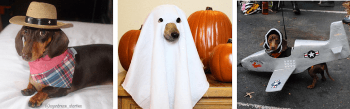 Get Inspired by these 14 Awesome Halloweenie Costumes!