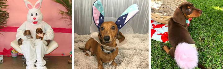 These 15 Dachshunds Are Having a Ruff Easter