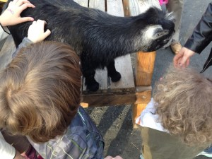The Monster and R at the zoo, with a goat