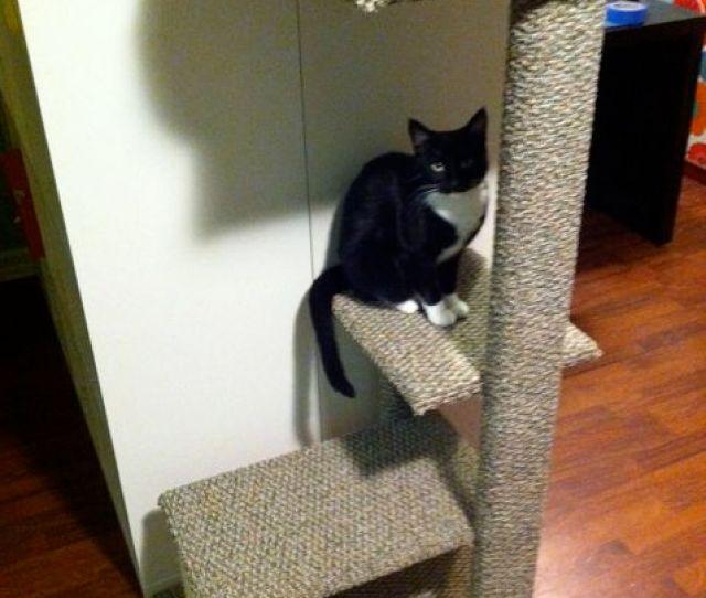 Diy Cat Tower Plans
