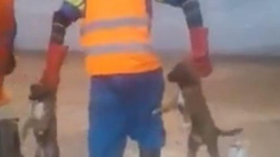 Massacre et atrocités à l'encontre de chiots et chiens errants à Boumalne Dadès