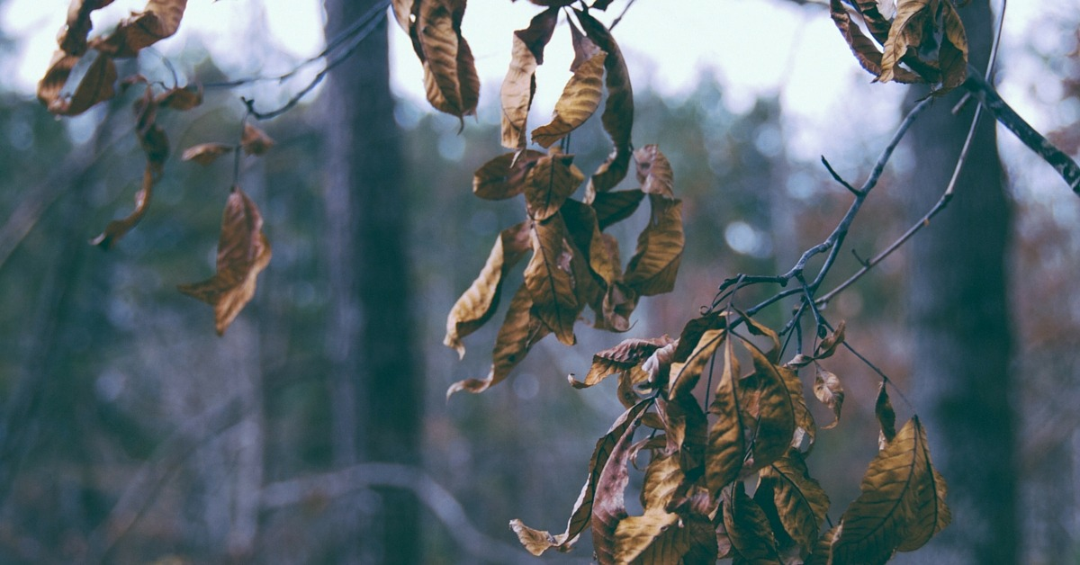 Image of a dead tree branch and leaves
