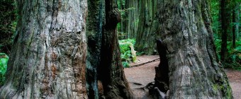Dadtography Travel Series - Redwood National Park Review Northern California