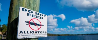 Do Not Feed the Alligators - Copyright Daniel Ruyter