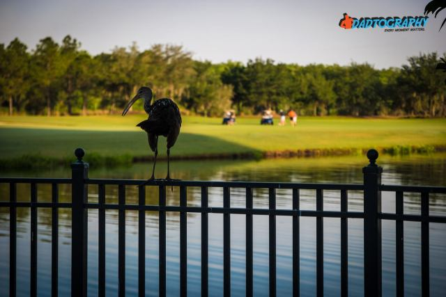 Mom 2 Summit - Ritz Carlton, Orlando Golf Course Bird