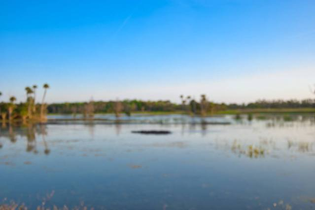 Orlando Wetlands Park Review - Lake Searcy