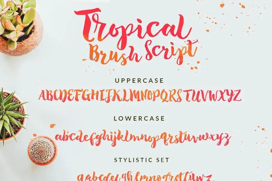 The Tropical Script Font-3