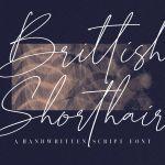 British Shorthair Font