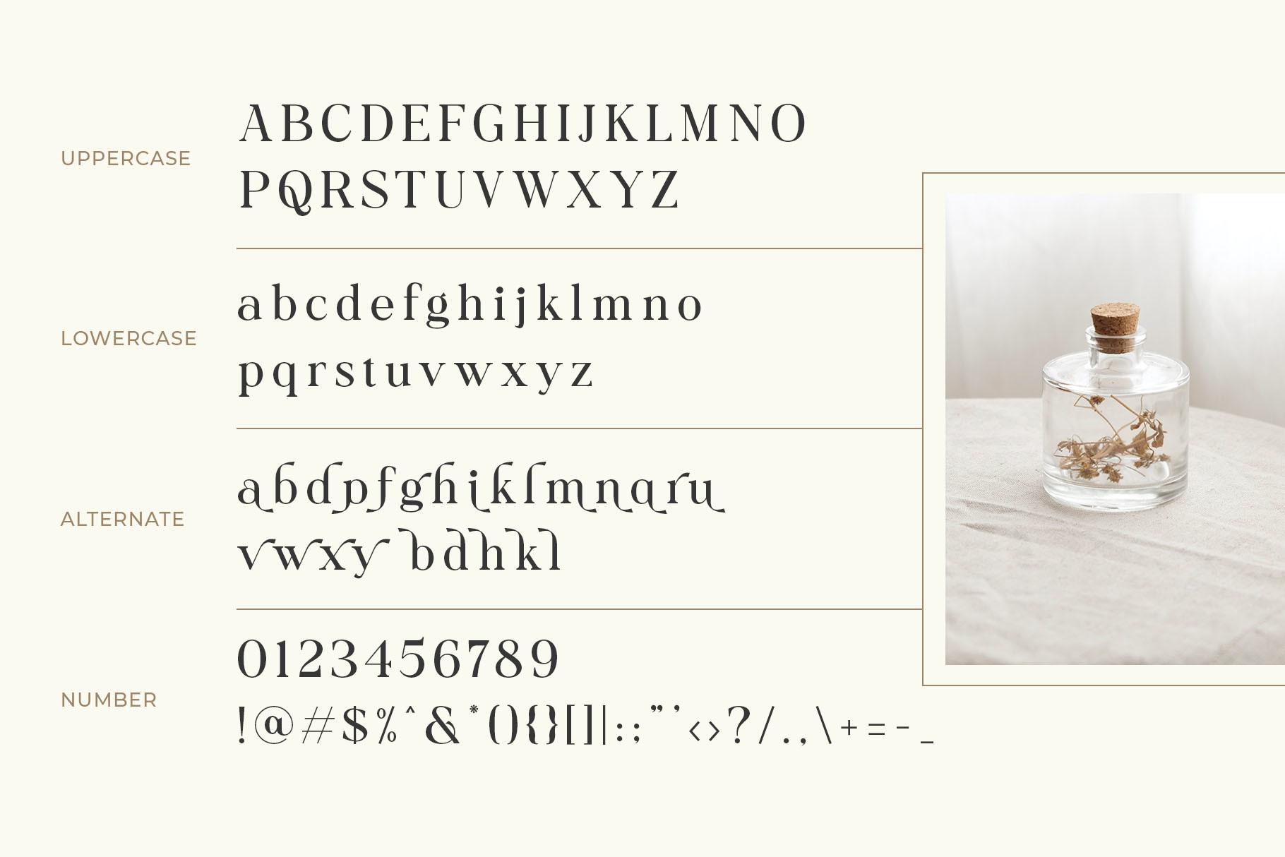 Collina Elegant Serif Font 3