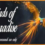 Birds of Paradise Font Free Download