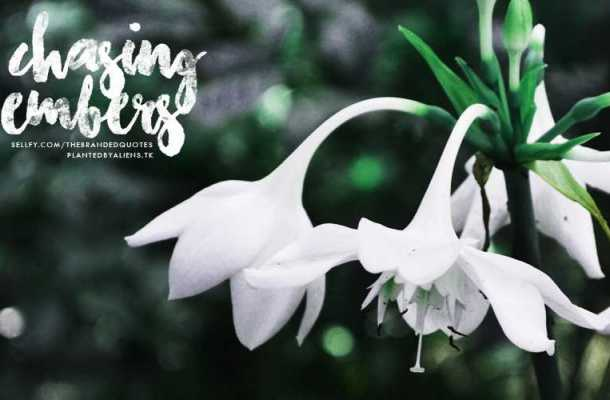 Chasing Embers Font Free Download