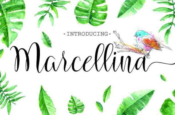 Marcellina Script Font Free Download