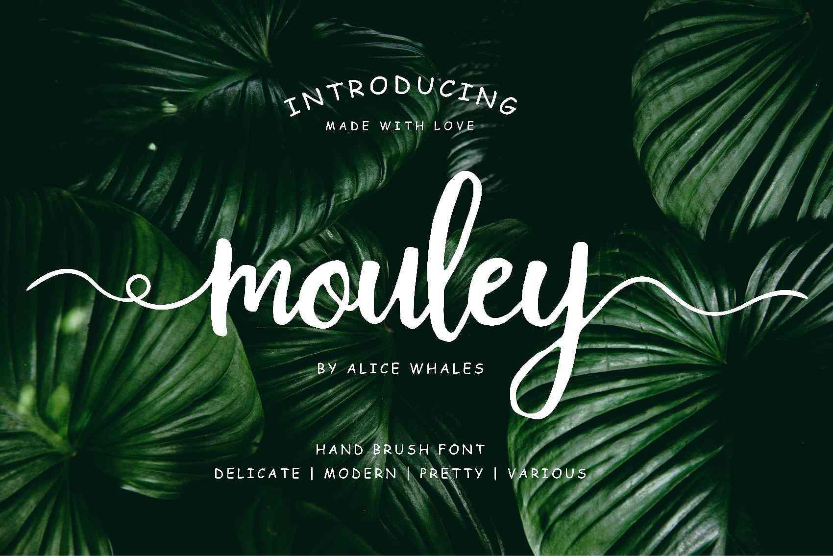 mouley-script-font
