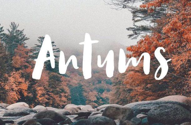 Antums Script Font