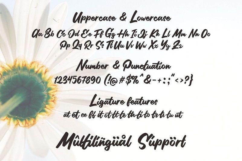 Stilda Lovely Script Font-3