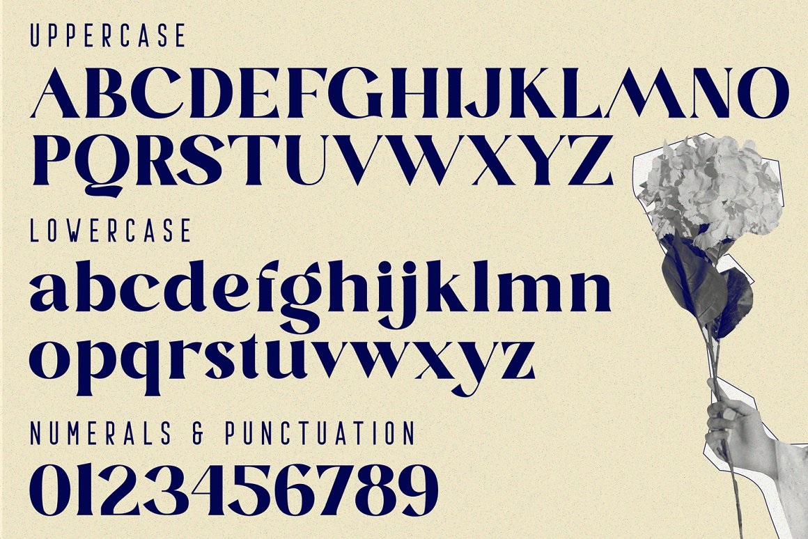 Blastula Font-2