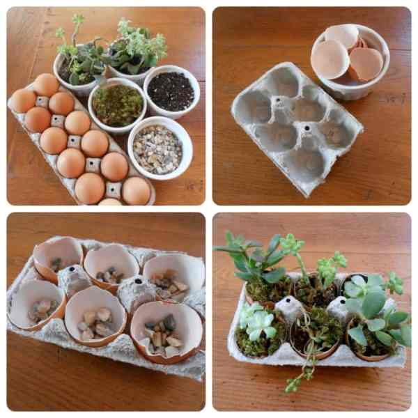 DIY succulent garden in egg carton