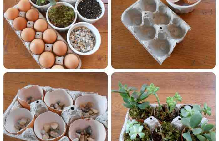 DIY Project: Succulent Garden in Egg Carton
