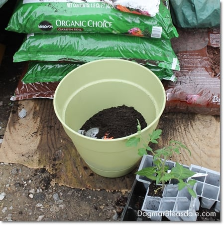 planting vegetables with Organic Choice