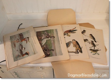 vintage Birds of New York prints, 1915
