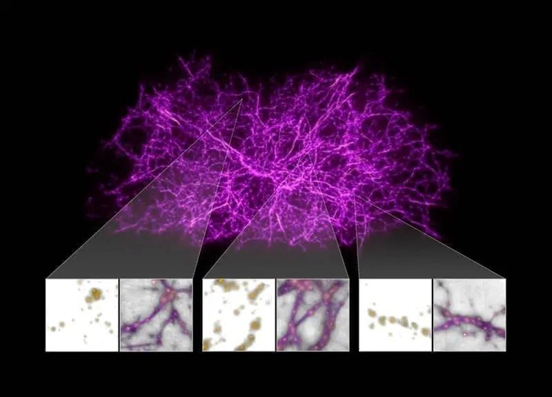 Materia OScura Biológica