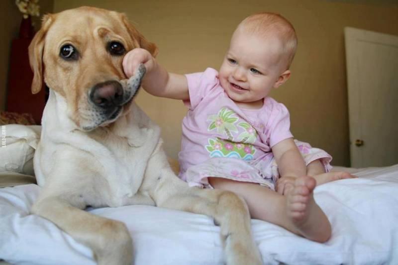 Risultati immagini per quadri di cani