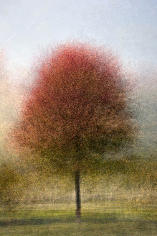 Photo Impressionistic image - Fall Colours In The Round