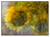 Sunflowers photographed impressionistically using the in the round montage technique. © Stephen D'Agostino.