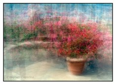An example of impressionism. A planter of azaleas; Body Holiday, St Lucia, photographed using the in the round montage technique. © Stephen D'Agostino.