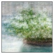A planter with flowers; Body Holiday, St Lucia, photographed impressionistically using the in the round montage technique. © Stephen D'Agostino.